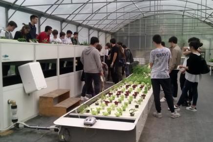 Ortaggi e fiori fuori suolo, l'alternativa acquaponica