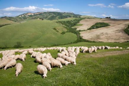 Il carico minimo di bestiame può variare territorialmente
