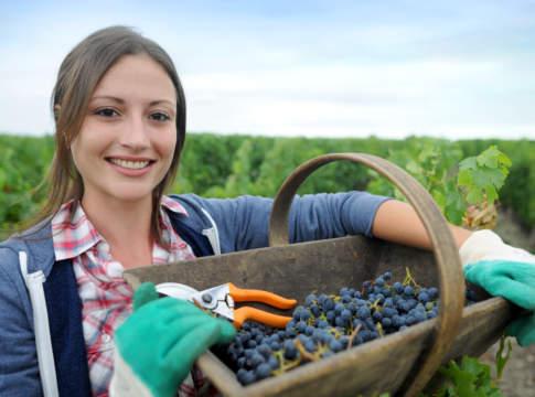 servizio civile universale agricolo