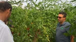 vilmorin sicilia pomodoro terra e vita