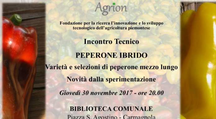 peperone ibrido agrion
