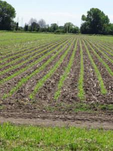 agricoltura conservativa