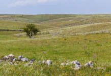 terre incolte