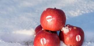 mesfruits crimson snow mela