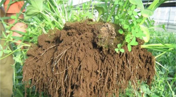 convegno agricoltura biodinamica