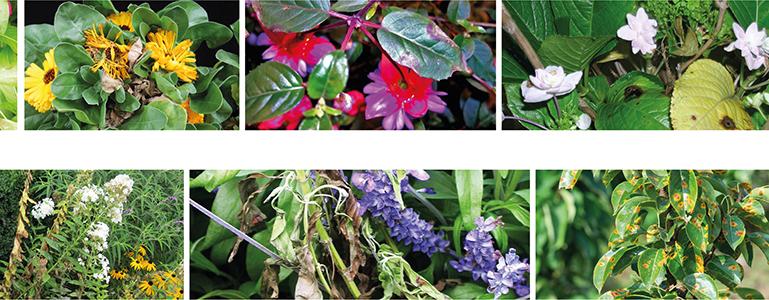 Malattie delle piante ornamentali