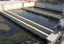 xylella fastidiosa trasmessa con acque reflue