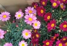 florovivaismo