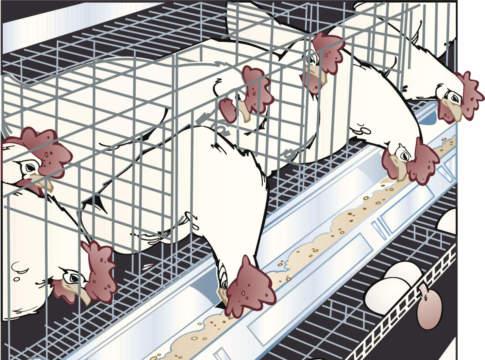 danni aviaria