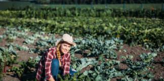 agricoltore attivo