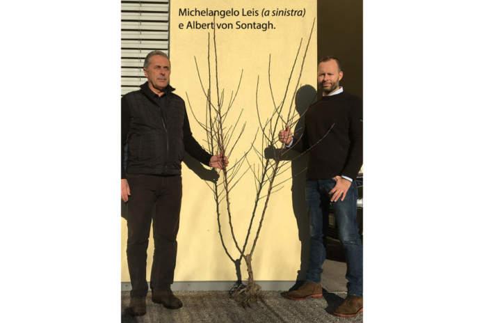 bibaum Michelangelo Leis e Albert von Sontagh
