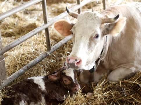 riproduzione animale