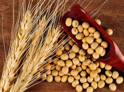 prezzi dei cereali, orzo e soia