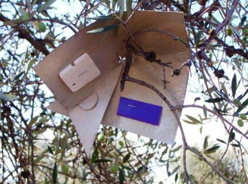 mosca dell'olivo trappola
