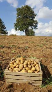 patate dotate di qr code