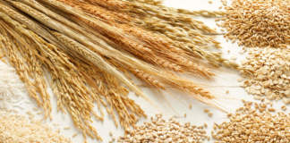grano tenero prezzi dei cereali