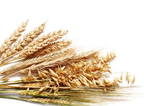 prezzi dei cereali dal 9 al 14 luglio 2018