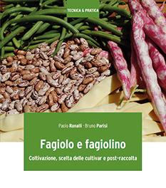 Fagiolo e fagiolino Coltivazione, scelta delle cultivar e post-raccolta