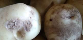 rizottoniosi della patata