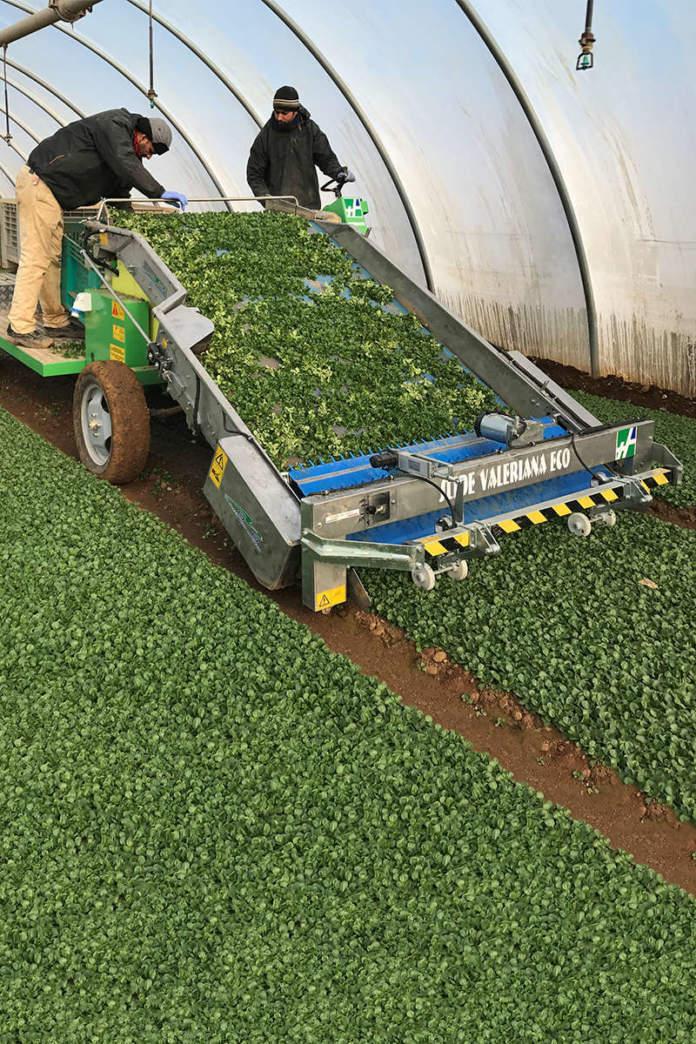 macchine per le colture orticole