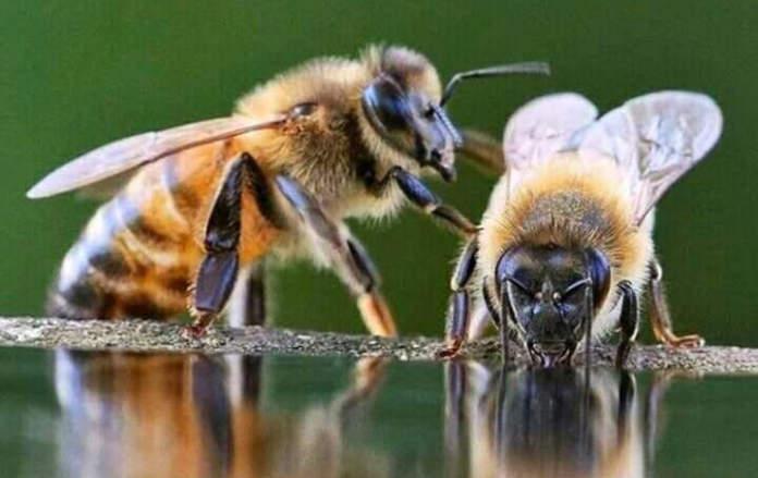 convegno sulle api
