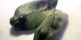 cecidomia dell'olivo