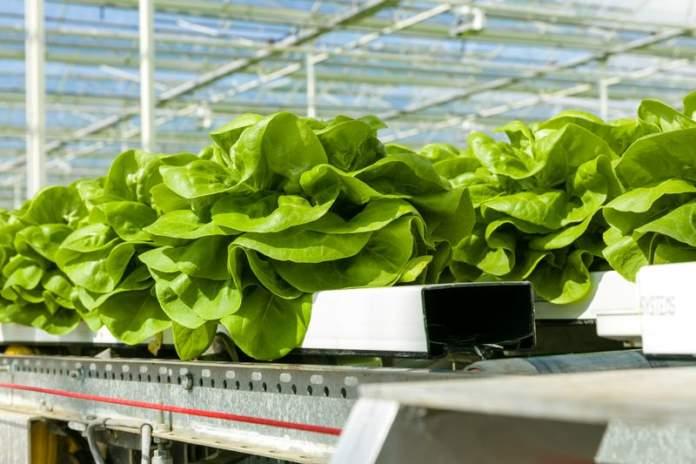 produzione sostenibile di ortaggi