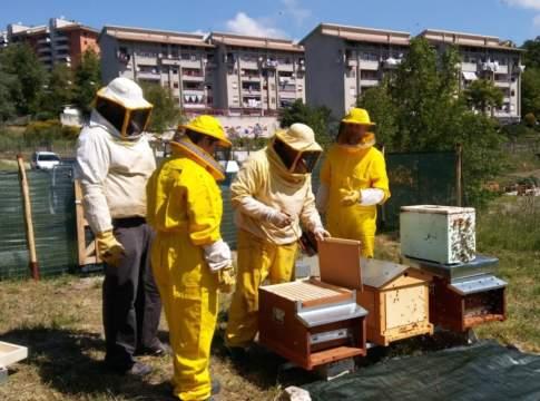 progetto api e orti urbani