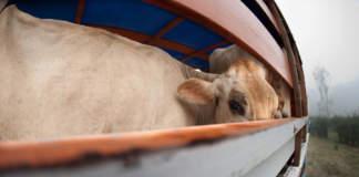 trasporto degli animali