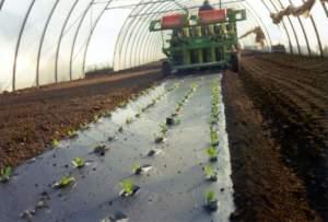 pacciamature biodegradabili
