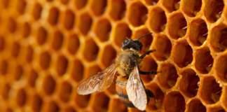 apicoltura e pac