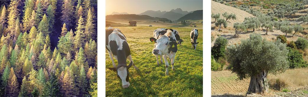 Presentazione Manifesto per il Paesaggio agrario e forestale italiano