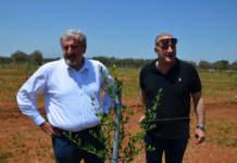 emiliano supervisiona i nuovi oliveti allevati a Fs-17 nel salento