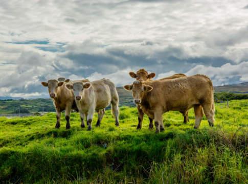 carne bovina irlandese