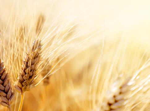 campagna cereali 2019