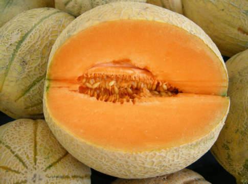 meloni retati