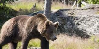 coldiretti orsi