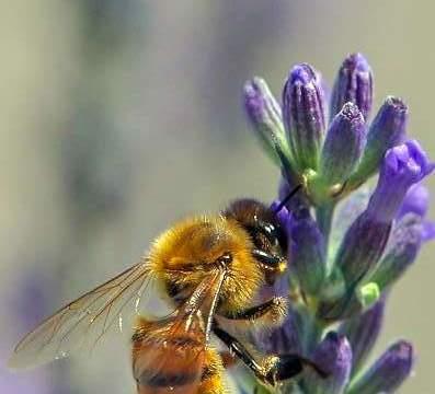 progetto tutela api nel verde urbano