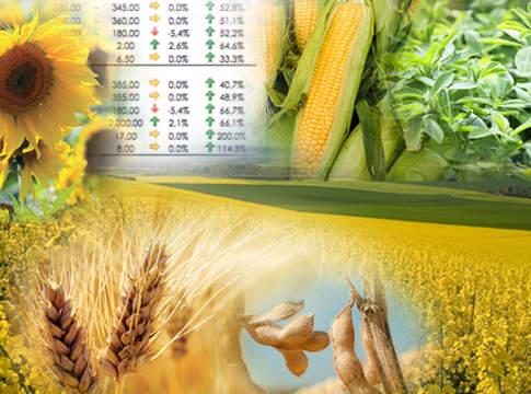 prezzi cereali