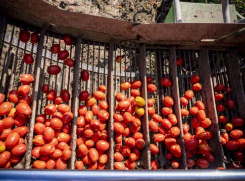 pomodoro da industria