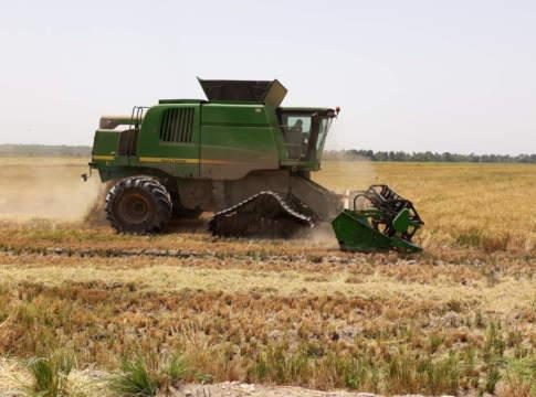 Mietitrebbia cingolata su riso