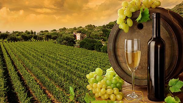 la nuova normativa vitivinicola presentata a verona