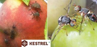 insetticida sistemico Kestrel