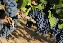 distretto del vino