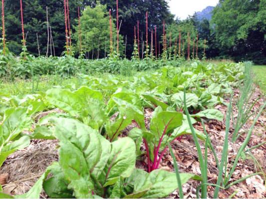 coltivazioni orticole presso il Vecjo mulin