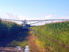 irrigazione digitale