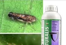 insetticida acaricida naturalis