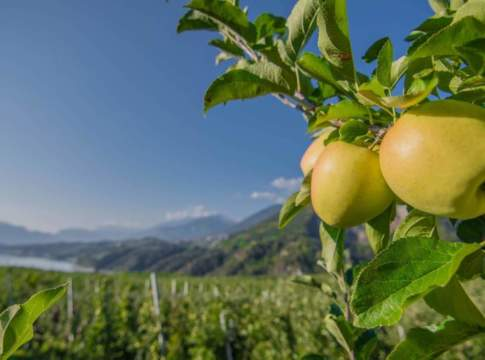 mele del trentino