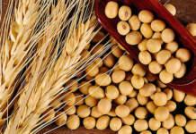I prezzi dei cereali e delle materie prime nella settimana dal 6 al 10 luglio 2020