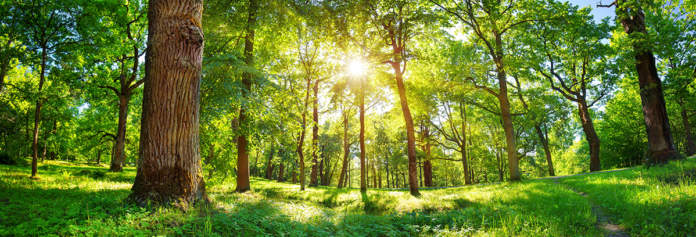 festa degli alberi 2020